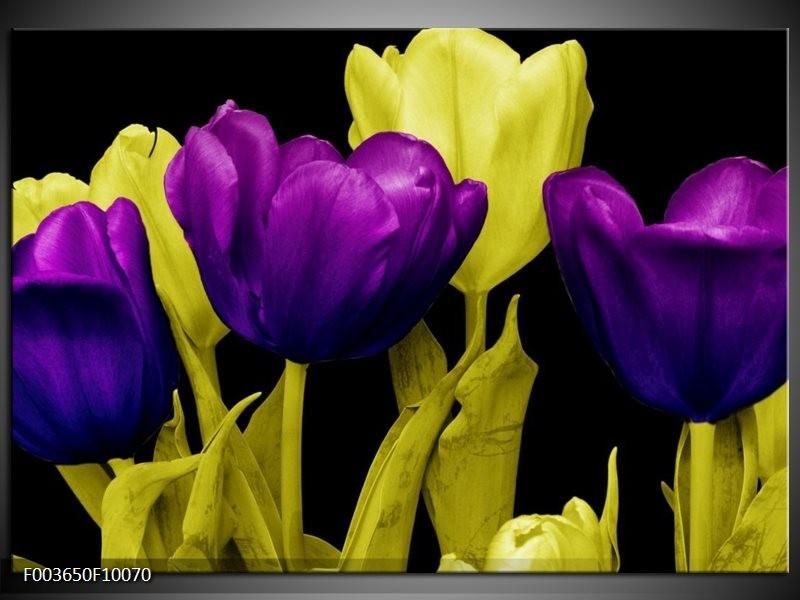 Glas schilderij Tulp | Paars, Geel, Zwart