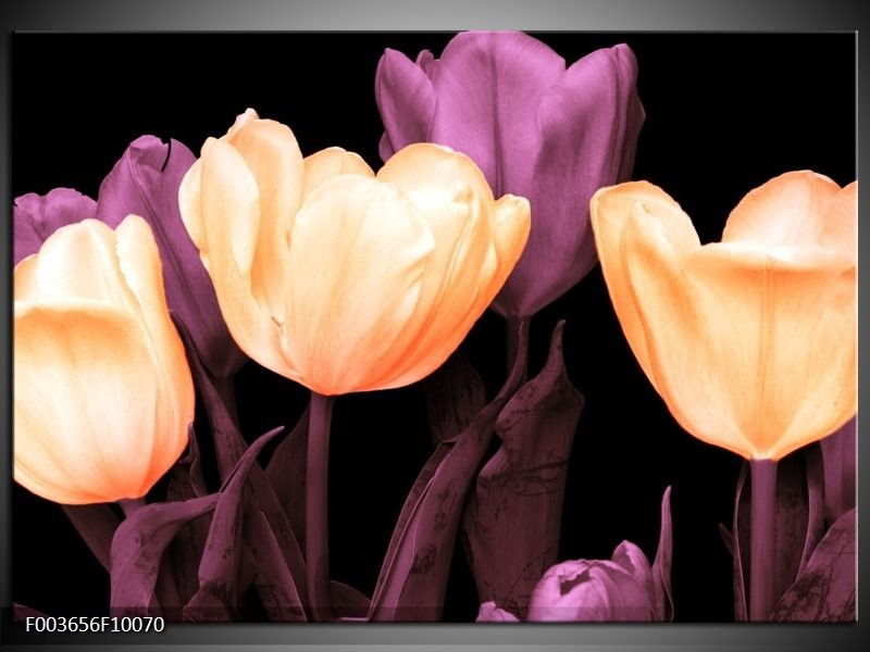 Foto canvas schilderij Tulp | Geel, Paars, Zwart