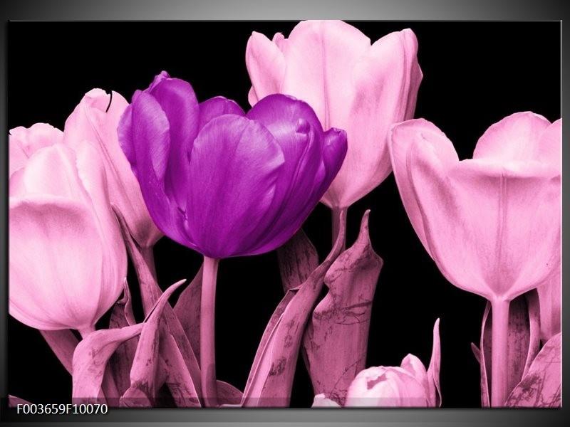 Glas schilderij Tulp   Paars, Roze, Zwart