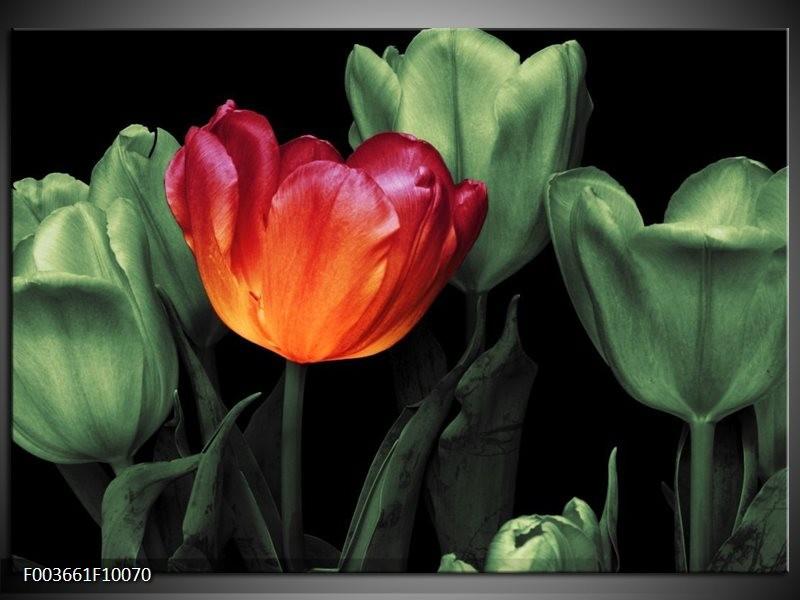 Foto canvas schilderij Tulp | Oranje, Groen, Zwart