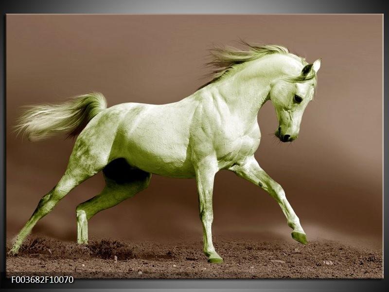 Glas schilderij Paard | Bruin, Groen