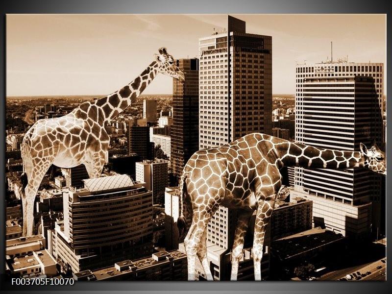 Glas schilderij Giraffe   Bruin, Wit