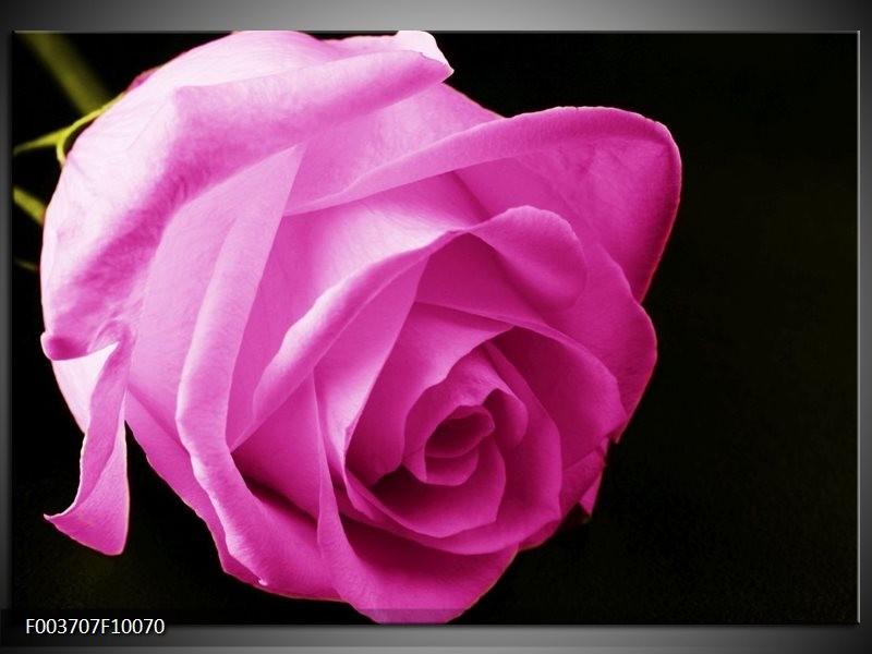Foto canvas schilderij Roos | Roze, Zwart