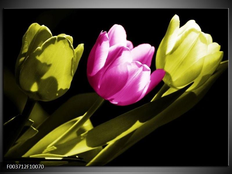 Foto canvas schilderij Tulp | Paars, Groen, Zwart