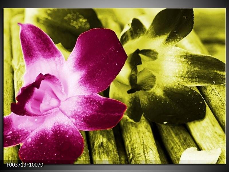 Foto canvas schilderij Bloem   Roze, Groen, Wit