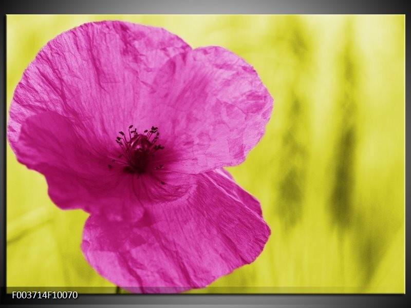 Foto canvas schilderij Bloem | Roze, Groen, Wit
