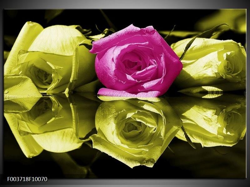 Glas schilderij Roos   Paars, Groen, Wit