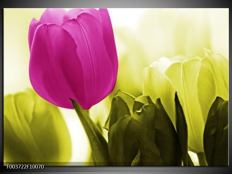 Glas schilderij Tulp   Roze, Groen, Wit