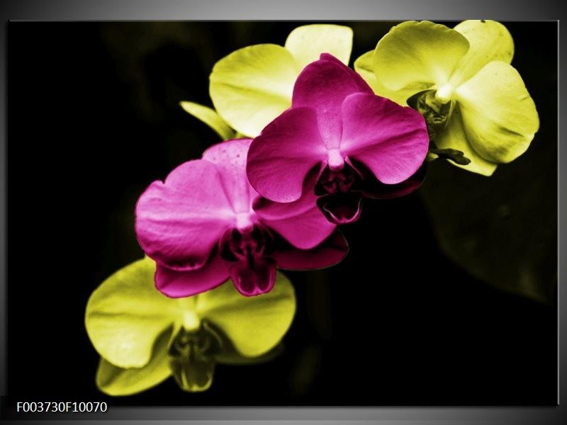 Foto canvas schilderij Orchidee | Roze, Groen, Zwart