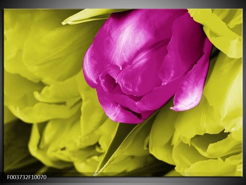Glas schilderij Tulp | Roze, Groen, Wit