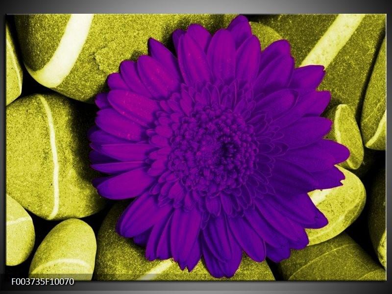 Foto canvas schilderij Bloem | Paars, Groen, Wit