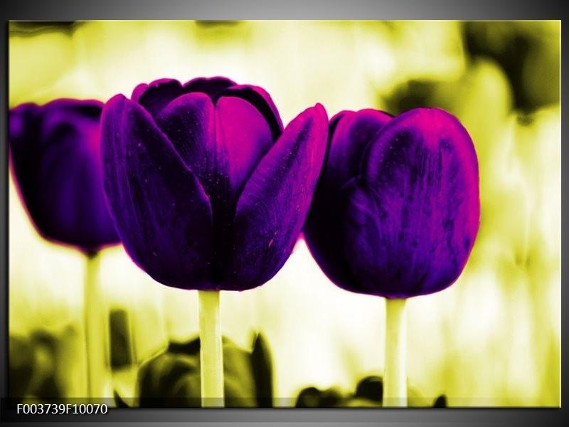 Glas schilderij Tulp | Paars, Groen, Wit