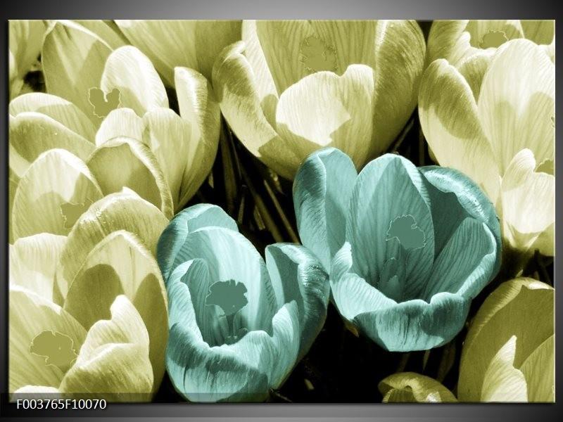 Glas schilderij Krokus | Blauw, Zwart, Groen