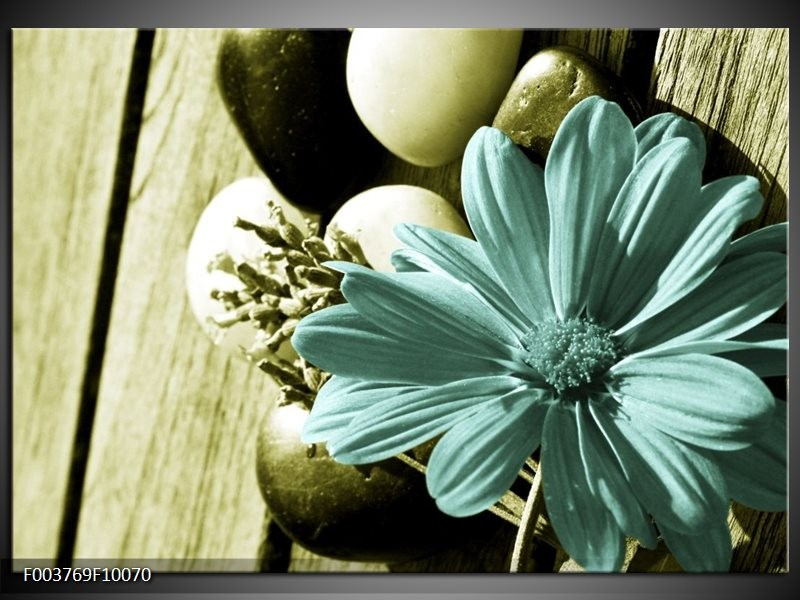 Foto canvas schilderij Bloem | Blauw, Zwart, Groen