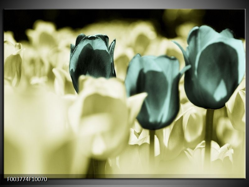 Foto canvas schilderij Tulp | Blauw, Zwart, Groen