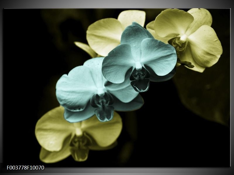 Glas schilderij Orchidee   Blauw, Zwart, Groen