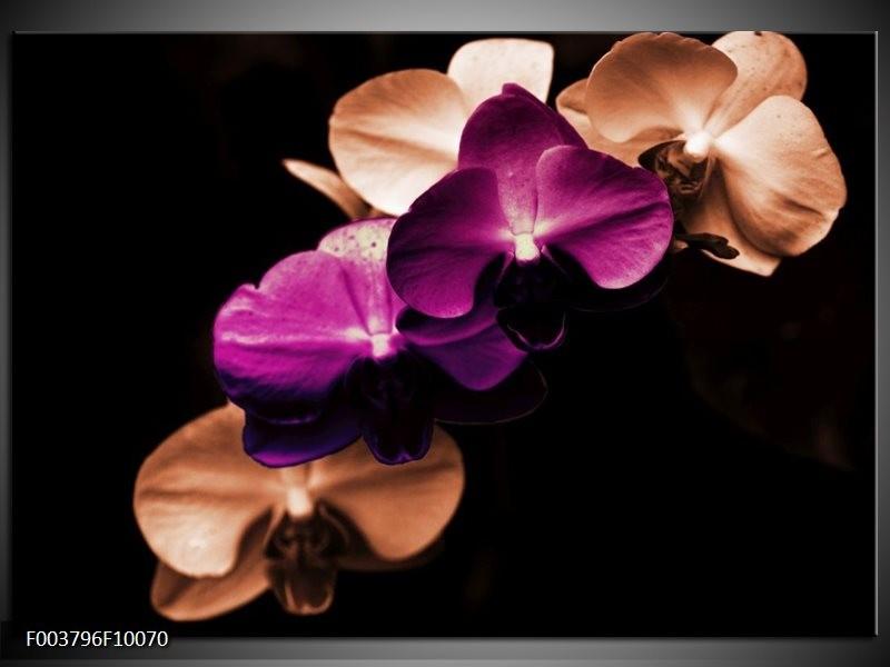Glas schilderij Orchidee | Paars, Bruin, Wit