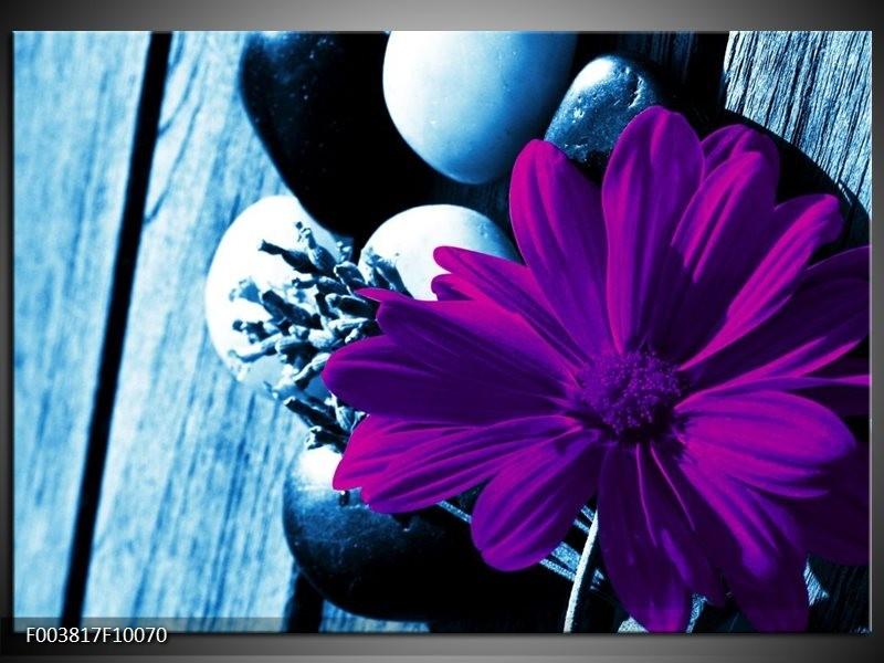 Glas schilderij Bloem | Paars, Blauw, Wit