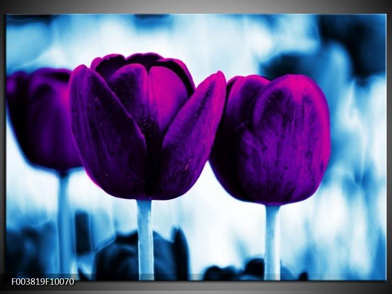 Glas schilderij Tulp | Paars, Blauw, Wit