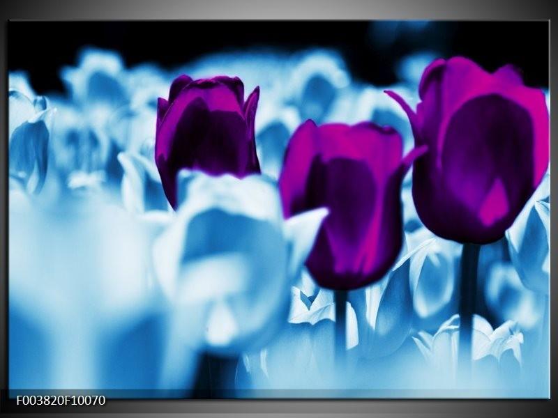 Foto canvas schilderij Tulp | Paars, Blauw, Wit