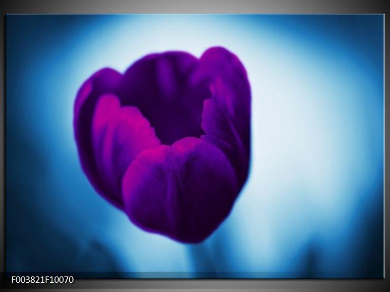 Glas schilderij Tulp   Paars, Blauw, Wit