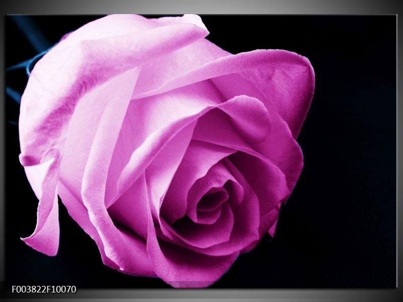Foto canvas schilderij Roos | Roze, Wit, Zwart