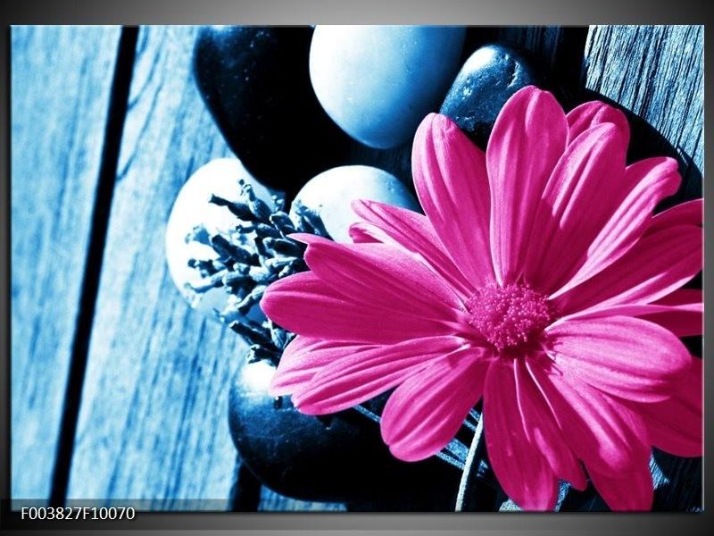 Foto canvas schilderij Roos | Roze, Blauw