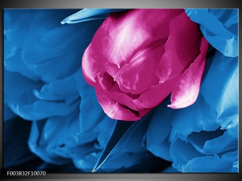 Foto canvas schilderij Tulp | Roze, Blauw