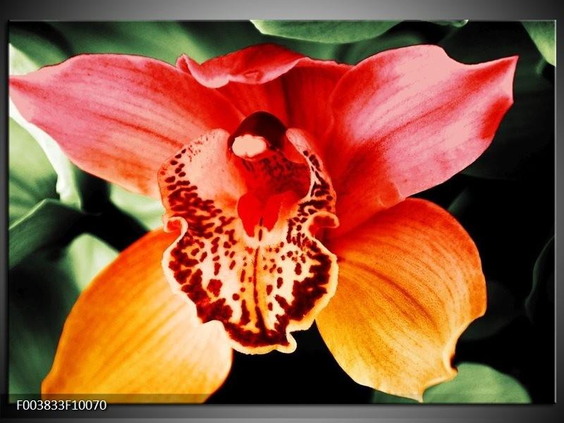 Glas schilderij Iris | Oranje, Geel, Groen