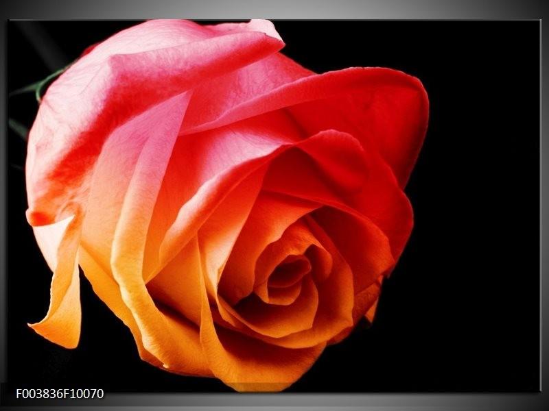 Foto canvas schilderij Roos | Oranje, Rood, Zwart