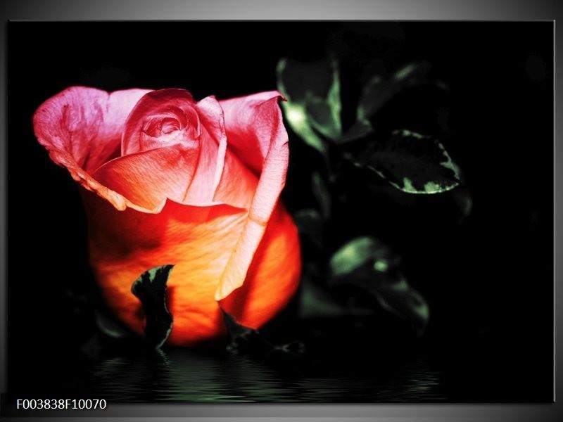 Foto canvas schilderij Roos   Roze, Zwart, Oranje