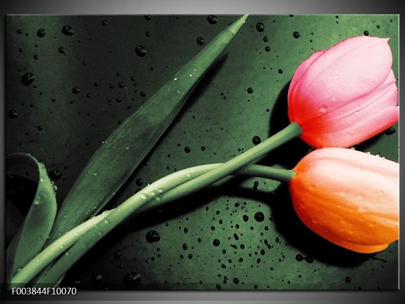 Glas schilderij Tulp | Groen, Rood, Zwart