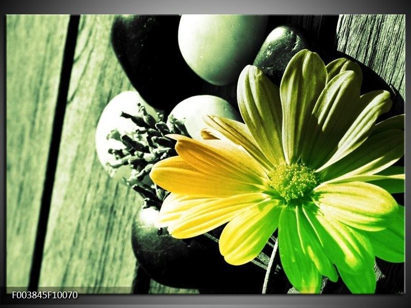 Foto canvas schilderij Bloem | Geel, Groen, Zwart
