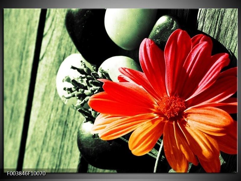 Glas schilderij Bloem | Oranje, Groen, Rood