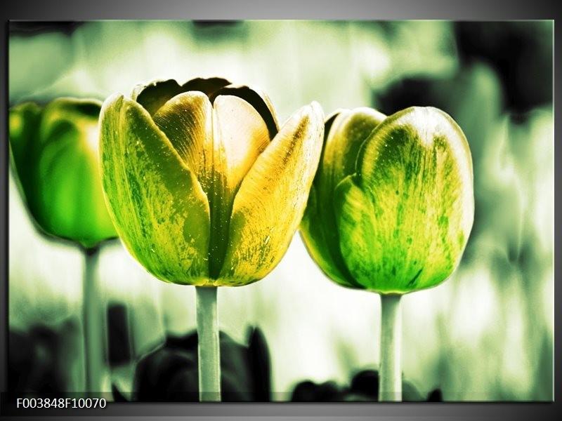 Glas schilderij Tulp | Geel, Groen, Wit