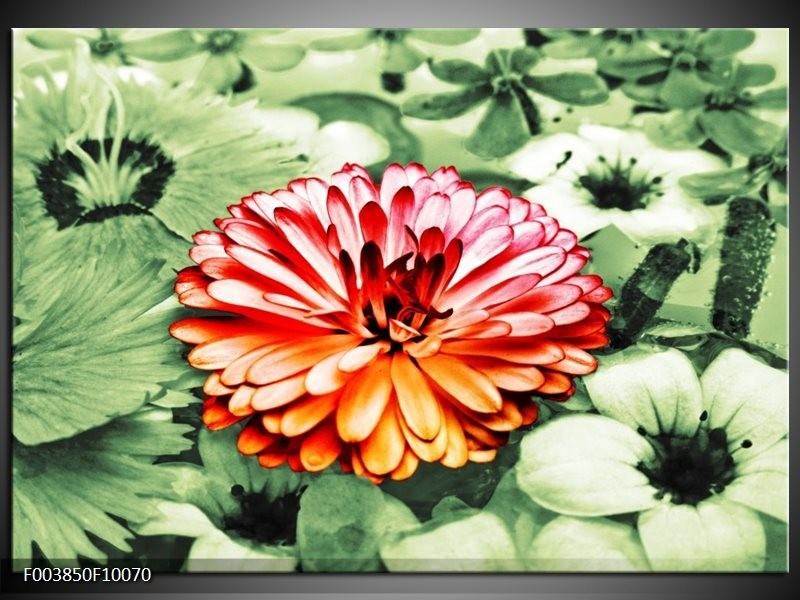 Foto canvas schilderij Bloem | Rood, Groen, Wit