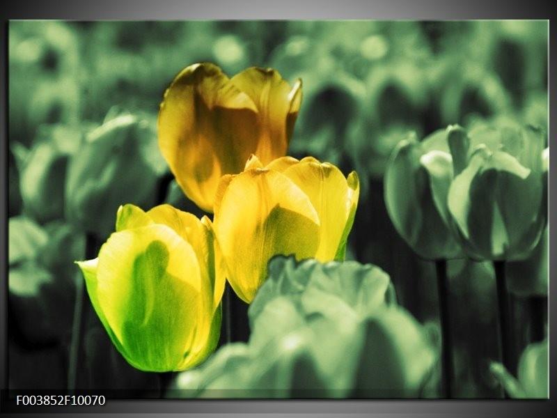 Glas schilderij Tulp | Geel, Groen