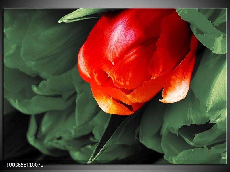 Glas schilderij Tulp   Rood, Groen, Wit