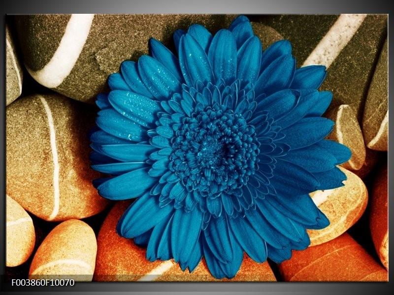Glas schilderij Bloem | Blauw, Oranje, Grijs