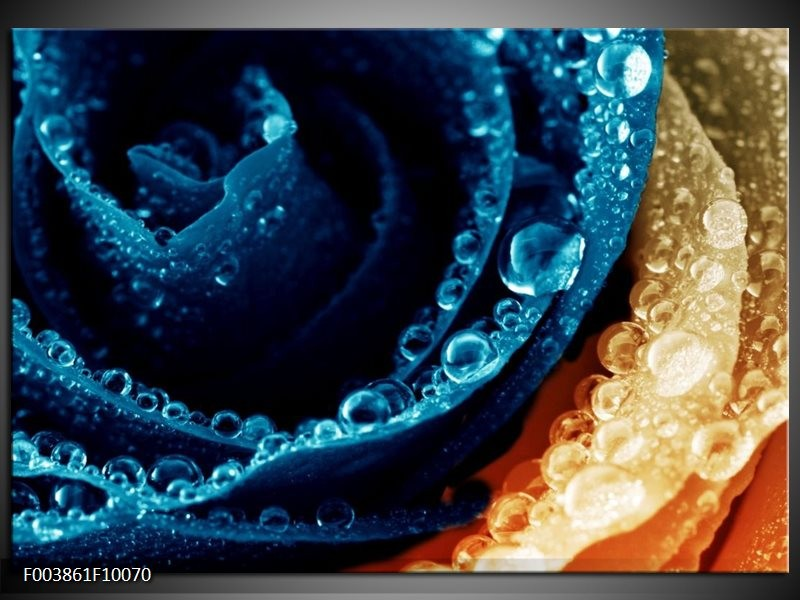 Glas schilderij Roos | Blauw, Oranje