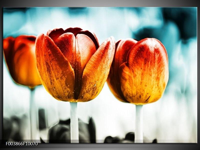 Glas schilderij Tulp | Oranje, Rood, Blauw