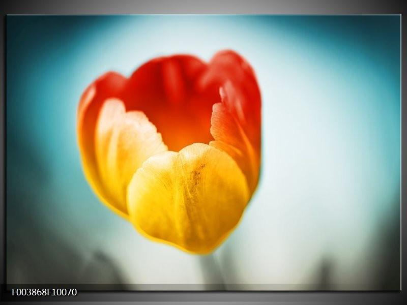Foto canvas schilderij Tulp   Oranje, Rood, Blauw