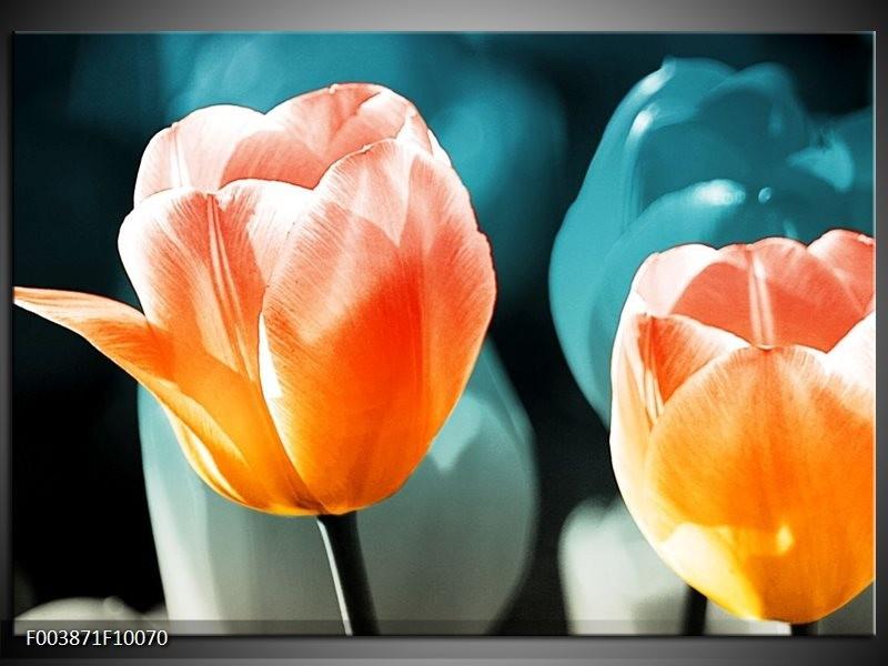 Glas schilderij Tulp | Blauw, Oranje