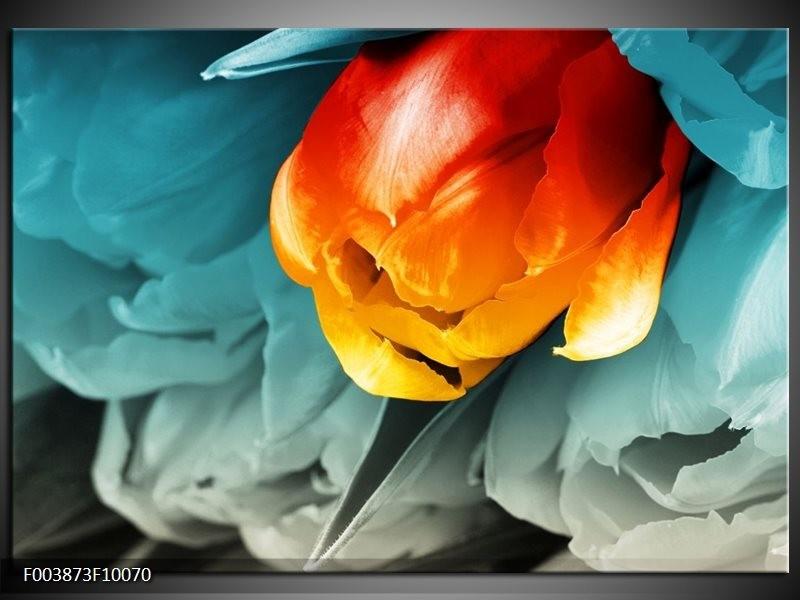 Foto canvas schilderij Tulp | Oranje, Rood, Blauw