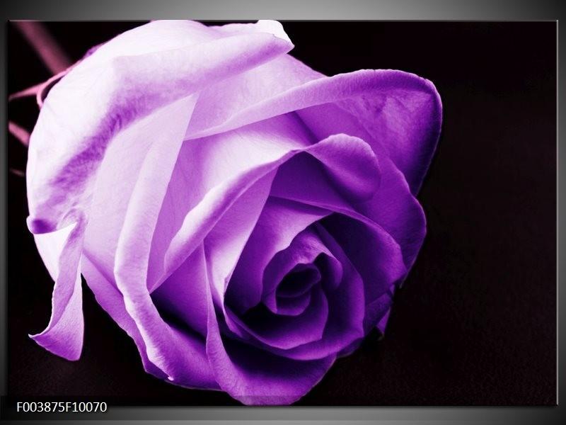 Glas schilderij Roos   Paars, Wit, Zwart