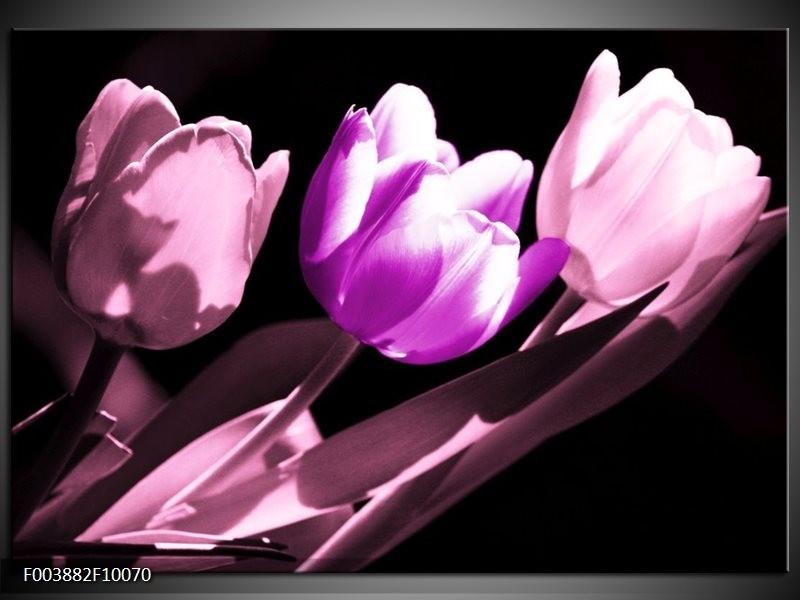 Foto canvas schilderij Tulp | Paars, Wit, Zwart