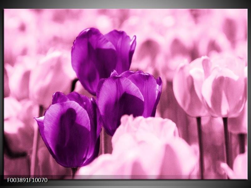 Glas schilderij Tulp | Paars, Wit, Zwart