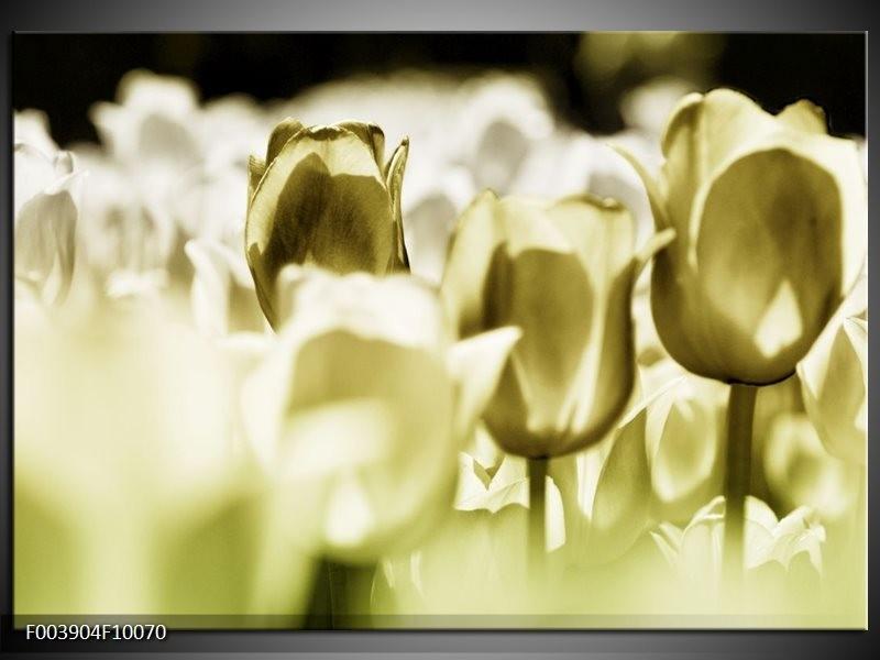 Foto canvas schilderij Tulp | Groen, Grijs