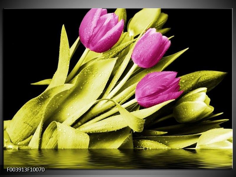 Glas schilderij Tulp | Paars, Groen, Zwart