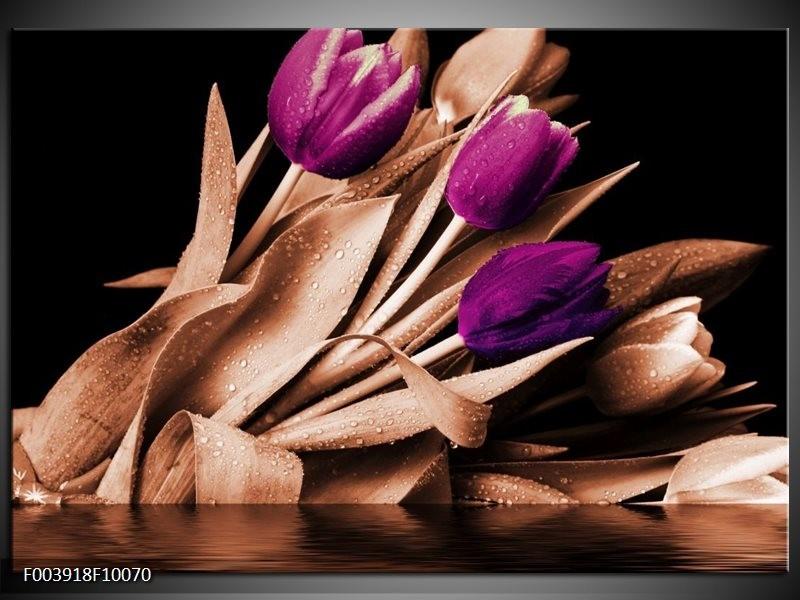 Glas schilderij Tulp | Bruin, Paars, Zwart